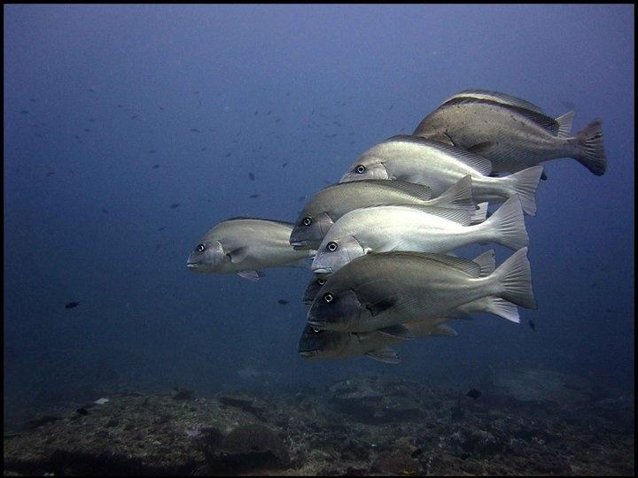 Diving with Scott Van Sant in Mafia Island, Tanzania