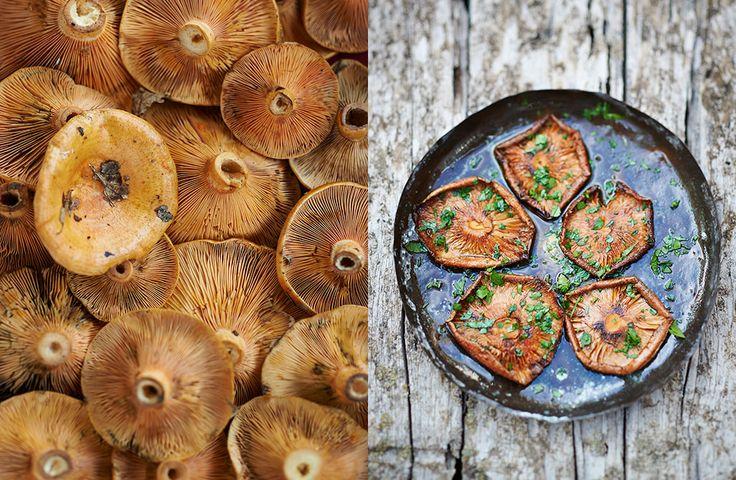 David Munns Food Photography and Video by David Munns