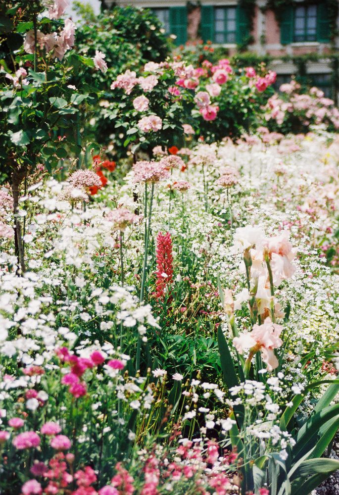 ZsaZsa Bellagio: Flowers Gardens, White Gardens, Wild Gardens, Secret Gardens, Gorgeous Gardens, Growing Wild, Country Gardens, Gardens Flowers Landscape, Wild Flowers