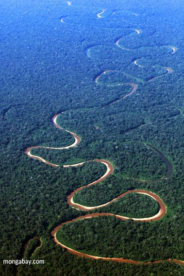 Picture of Amazon Rainforest from above.