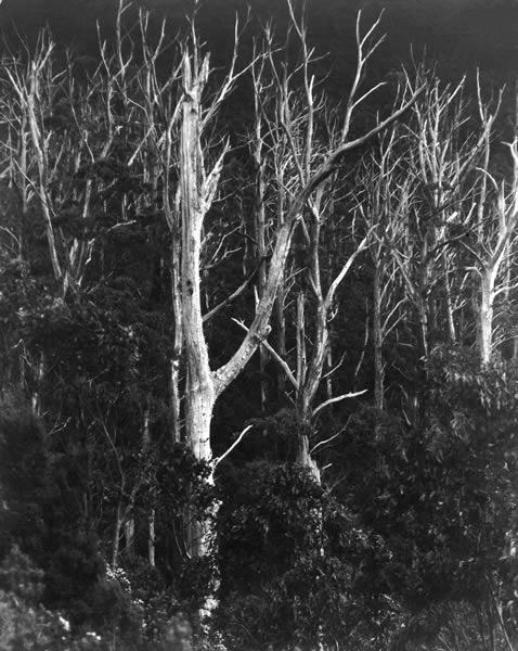 Mt Wellington, Hobart - The ghosts of '67 by Lee Bratt