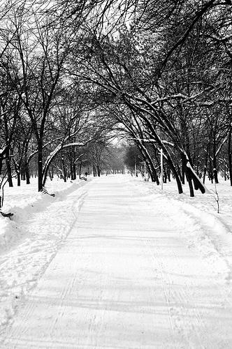 Winter in Bucharest parks