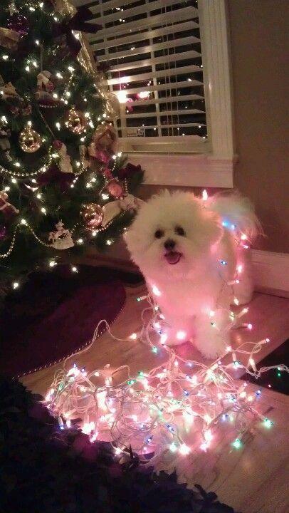 Need to do this with Sasha next Christmas.