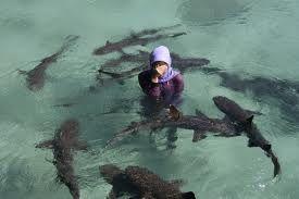 Ombak di Pulau Karimun jawa tergolong rendah dan jinak, dibatasi oleh pantai yang kebanyakan adalah pantai pasir putih halus. Karimun memiliki banyak potensi kepariwisataan khususnya wisata selam yang sangat menarik dan pemandangan pulau - pulau yang indah