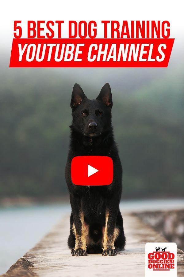 5 Best Dog Training Youtube Channels Best Dog Training Training