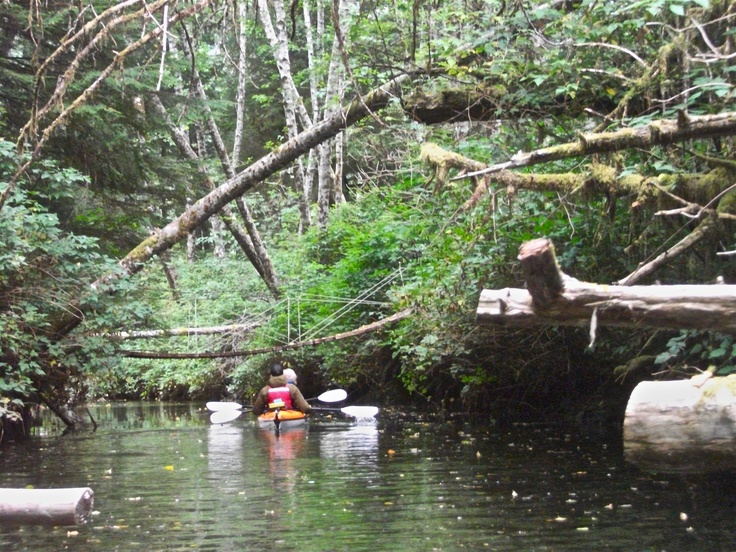 Paddling the Estuary in our @SeawardKayaks. Clayoquot Wilderness Resort. www.wildretreat.com