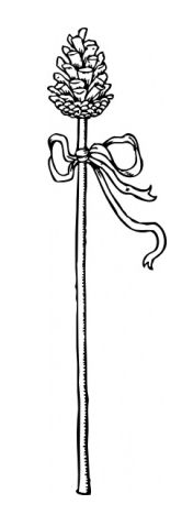 A thyrsus or thyrsos (Ancient Greek: θύρσος) was a wand or staff of giant fennel (Ferula communis) covered with ivy vines and leaves, sometimes wound with taeniae and always topped with a pine cone. The thyrsus, associated with Dionysus (or Bacchus) and his followers, the Satyrs and Maenads, is a symbol of prosperity, fertility, hedonism, and pleasure/enjoyment in general.