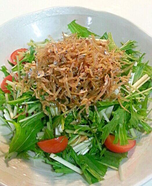 おむかえさんからじゃこを頂きました。まずはカリカリじゃこサラダで。 - 11件のもぐもぐ - 水菜とカリカリじゃこのサラダ by kiyo2525