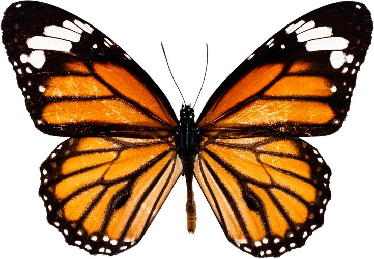 ... you can download image PNG image or background - Butterfly PNG image