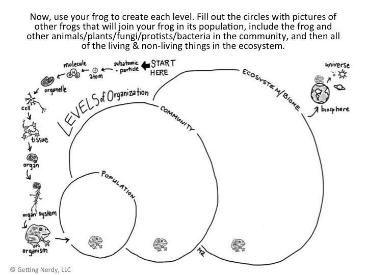 Introduce ecology with the levels of organization from atom to universe!