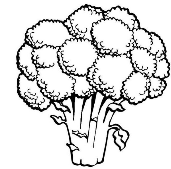 Green Broccoli Coloring Pages For Kids Free Coloring Sheets Vegetable Coloring Pages Cartoon Coloring Pages Coloring Pages
