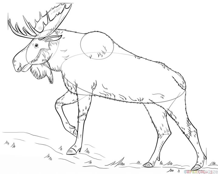 how to draw a moose for beginners