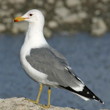 gull california and utah on pinterest