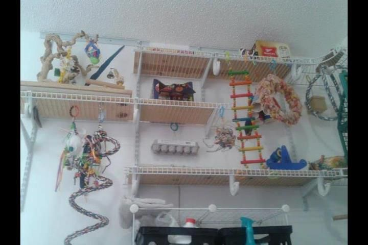 Parrot play area. Would love to do this for my Green-Cheeck Conure in my next house. She would absolutely love it.