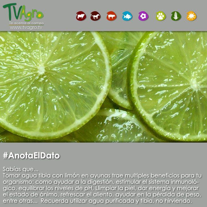 #AnotaElDato beneficios de beber agua tibia de limón cada mañana
