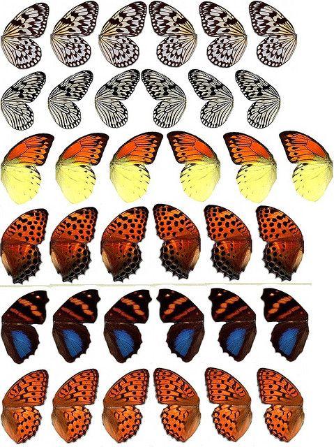 All sizes | Butterfly Wings 1, via Flickr.  Emilynn