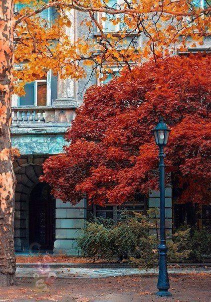 Осень — это кофе с корицей, кленовые листья, разноцветные, как часть детского рисунка, тёплые, нежные плюшки с ванилью и тонкий запах дыма.