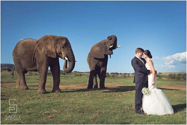 #Safarisoulmates got to share our perfect day with two gentle giants! +Southern Destinations