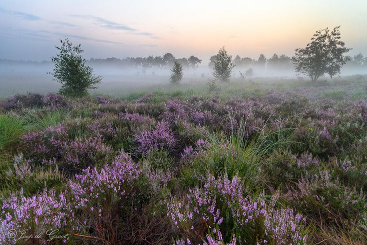Wildflowers and mist.