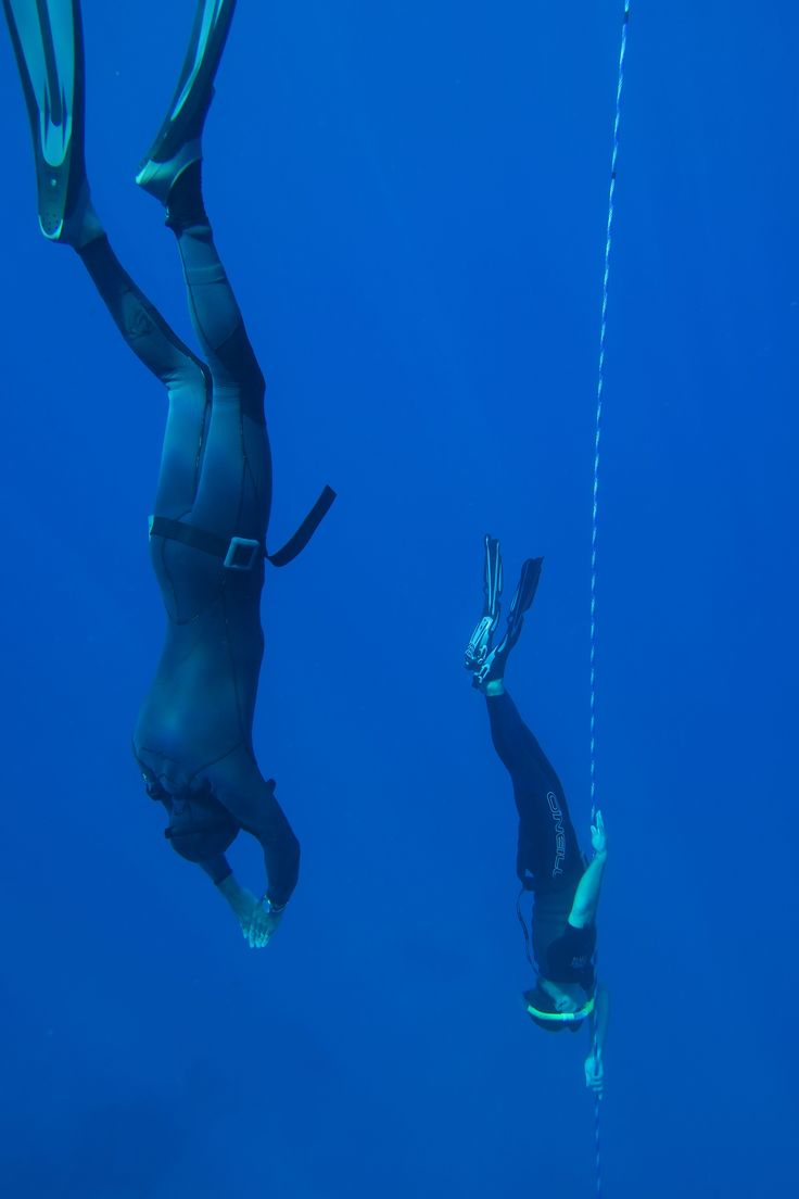 Maui Now: Local Dive Company Offers PADI Level 1 Freediving Course
