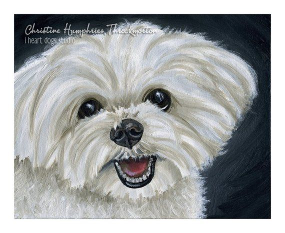 LOOKING for a GOOD HOME: Maltese Original oil painting by i heart dogs studio.
