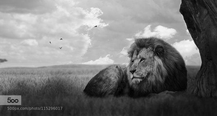 King by Meelux