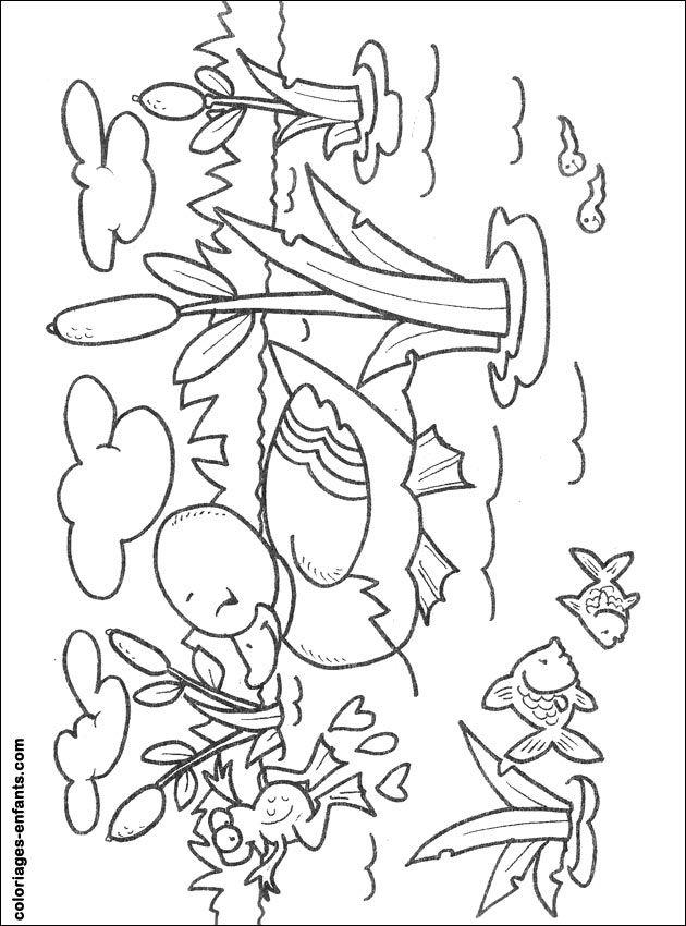 Dessin de canard à colorier pour les enfants