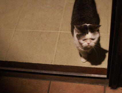 夜遅く、音をたてないように静かに鍵を開けても、寝ぼけ顔のまこが ドアの前で待っています。