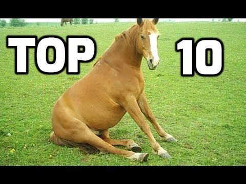 Top 10 Funny Horse Videos Compilation 2016 : Video Clips From The Coolest One