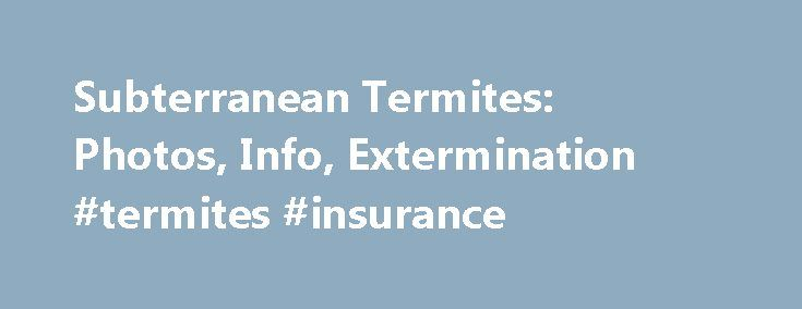 Subterranean Termites: Photos, Info, Extermination #termites #insurance http://maryland.remmont.com/subterranean-termites-photos-info-extermination-termites-insurance/  # Subterranean Termites The best method of subterranean termite control is to avoid water accumulation near the foundation of the home. Prevent subterranean termite access by diverting water away with properly functioning downspouts, gutters and splash blocks. Store firewood at least 20 feet away from the home, and keep mulch…