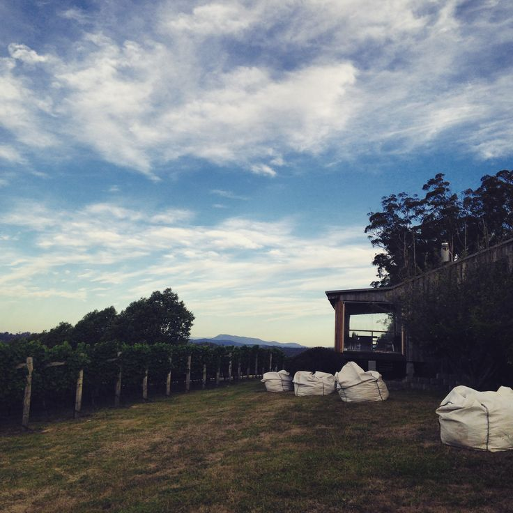 Net bags are out, Vintage 2016 in Tasmania is getting closer!