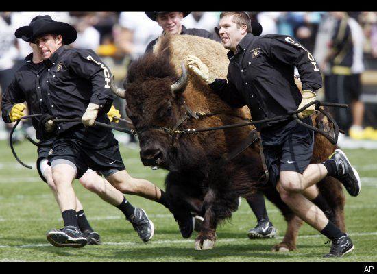Halphie the buffalo, University of Colorado