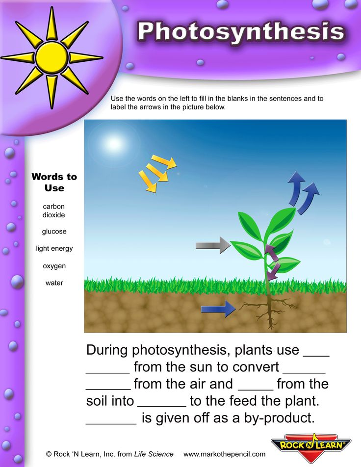 photosynthesis worksheets for elementary classrooms pin 4 school work photosynthesis. Black Bedroom Furniture Sets. Home Design Ideas