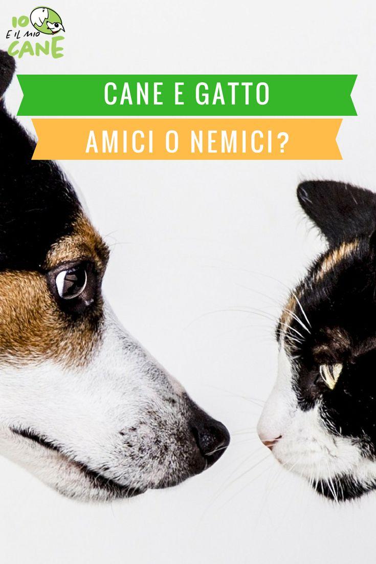 E' possibile la convivenza tra cani e gatti?