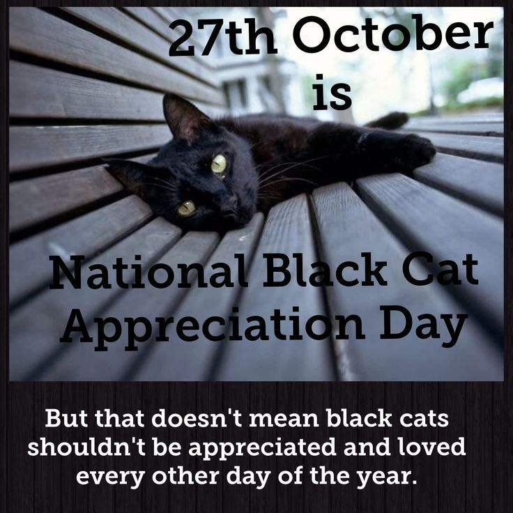 Today and every day is black cat appreciation day
