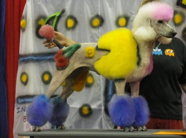 Creative Dog Grooming - Pac-Man Poodle