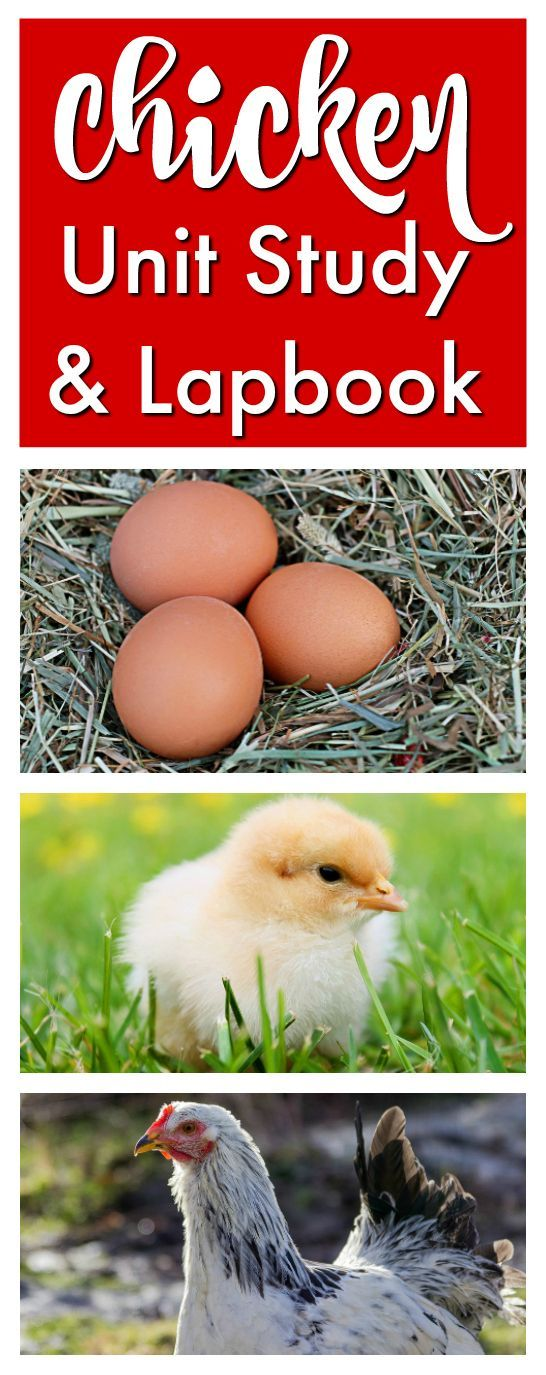 Chicken Unit Study & Lapbook from Homeschool Share