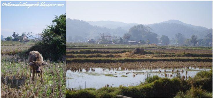 Campagne autour de Hsipaw
