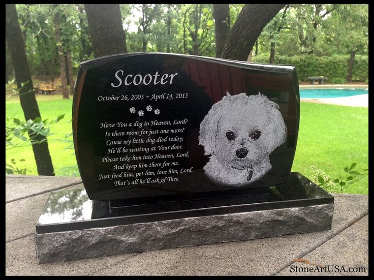 17 Best images about PETS NO LONGER WITH US on Pinterest ...