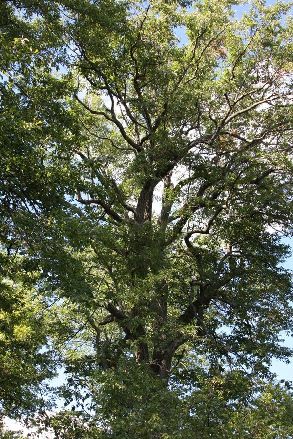 Tree Campus USA, Denison University.