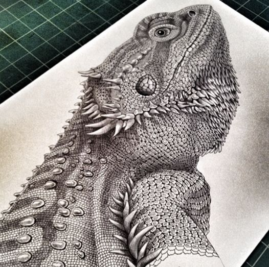 Almost done with my Bearded Dragon. Just a few more scales and the background and then I'm done. Prints will be available shortly in my shop at www.etsy.com/shop/timjeffsart