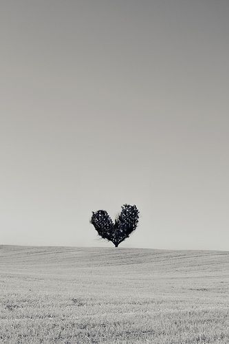 The lonely love