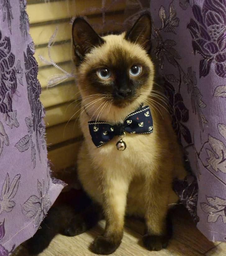 120 French Male Cat Names Cat Names Super Cat Boy Cat Names