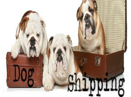 Pet Shipping,Transportation,Pet Travel & Relocation Services