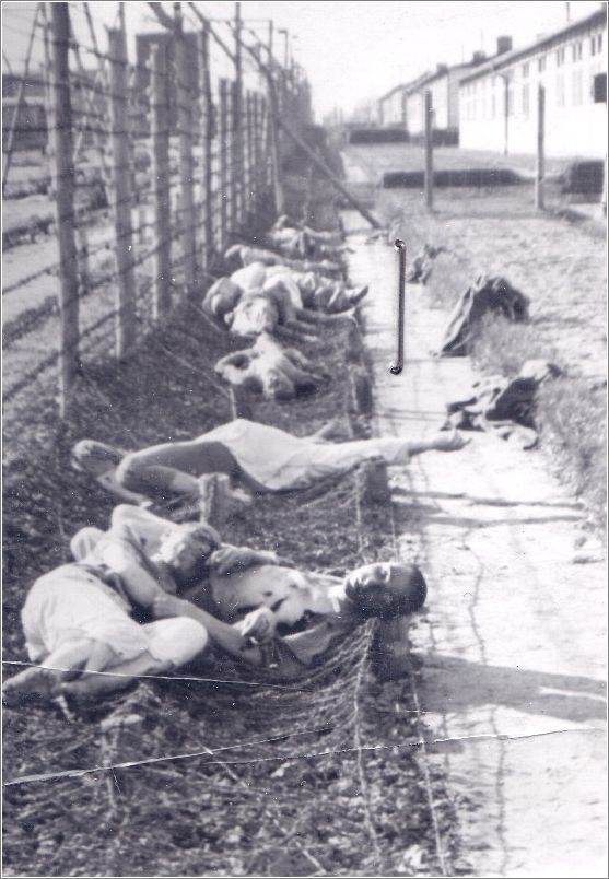 Mauthausen dead prisoners lying along the barbed wire