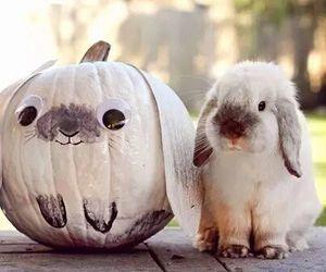 No carving bunny pumpkin.