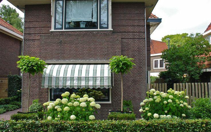Voortuin voor een jaren30 woning met buxushagen en hortensia 39 s jaren 30 - Eigentijds pergola design ...