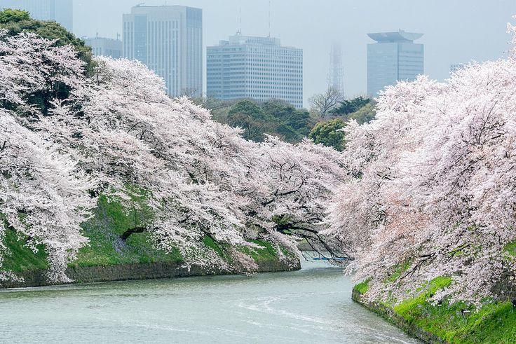 Tokyo Spring 1