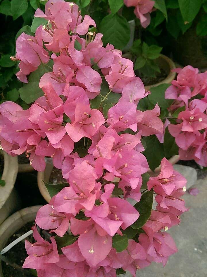 Pin Von Kurczne Valeria Auf Capas Schone Blumen Liebe Blumen Blumen