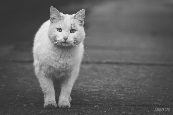 No enfoques al gato blanco by Chris Rubilar on 500px